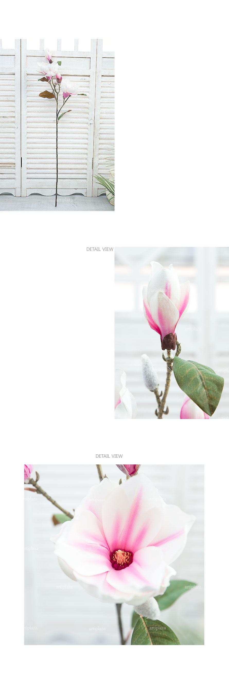 핑크/화이트