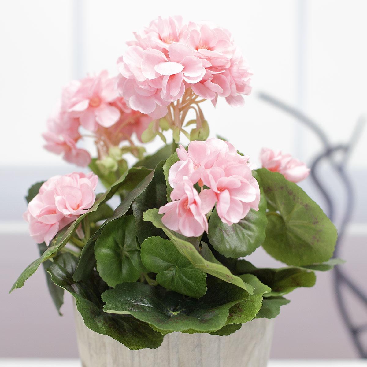 핑크색 제라늄 꽃