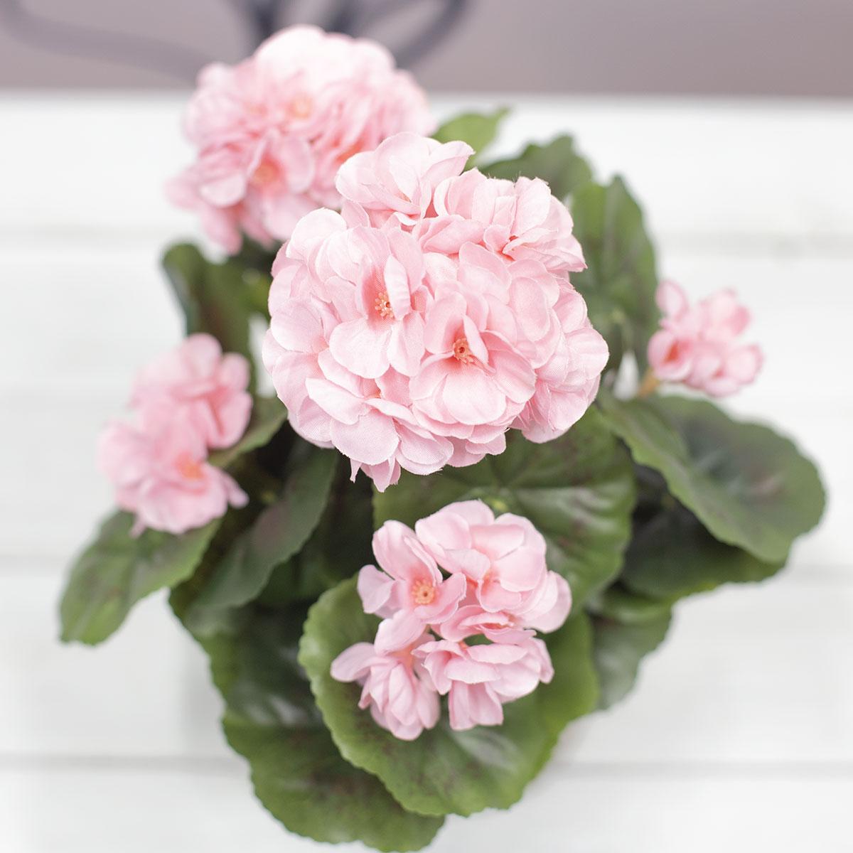 핑크색 위에서본 사진