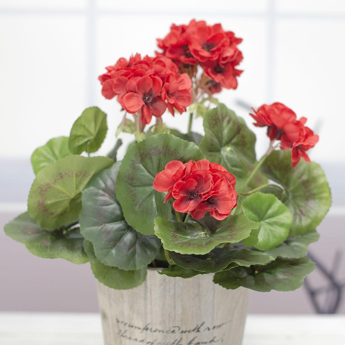 레드색 제라늄 꽃