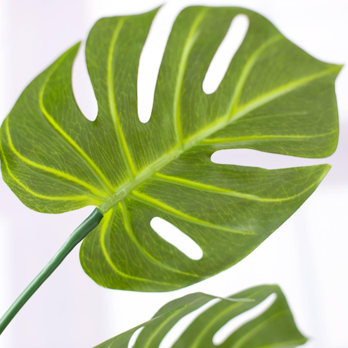 잎사귀 아래쪽 디테일 이미지