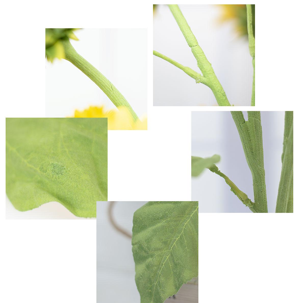 잎사귀 디테일 이미지2