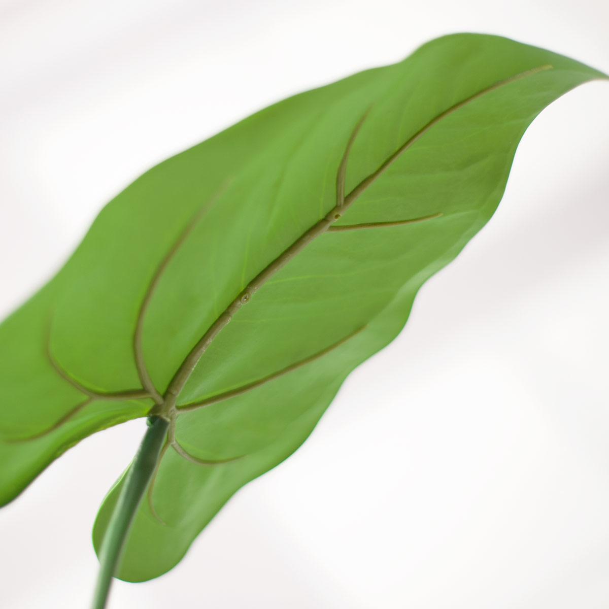 잎사귀2 디테일 이미지