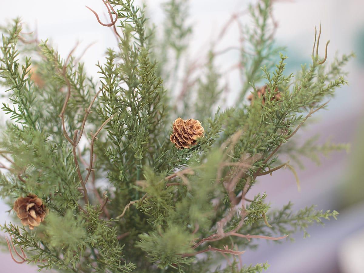 솔방울 잎사귀 디테일 이미지
