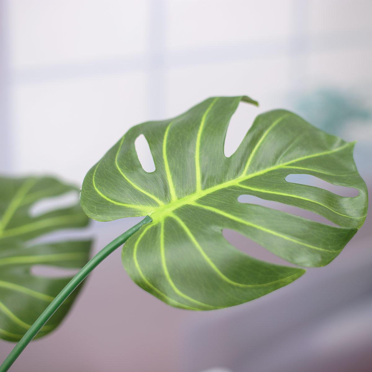 잎사귀와 디테일 이미지