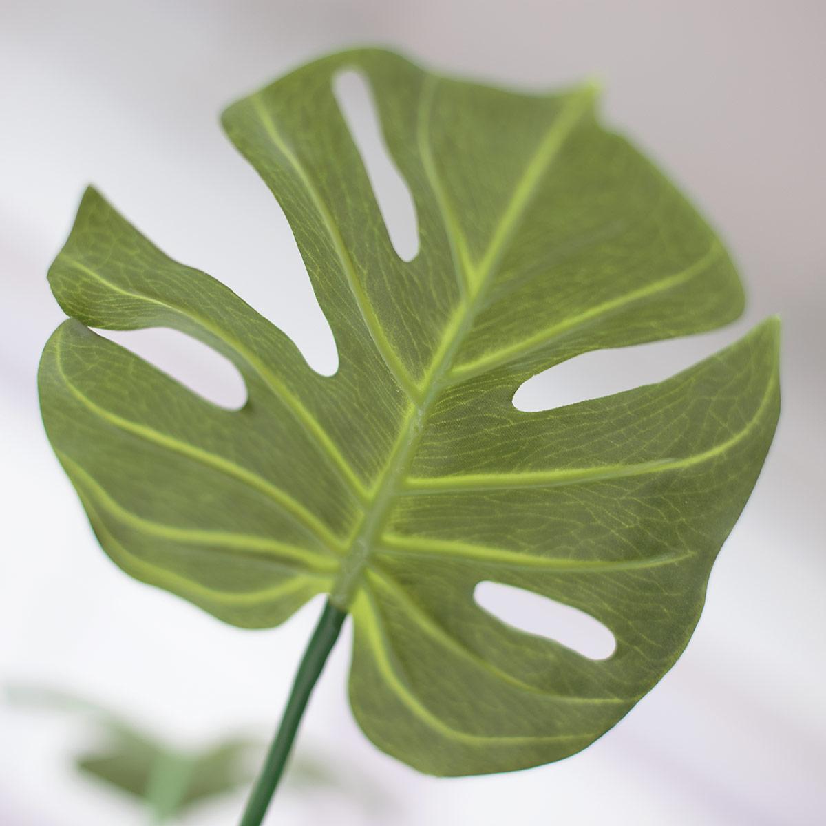 잎사귀 뒷면 디테일 이미지