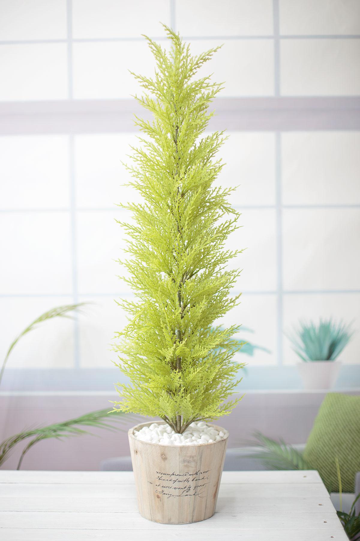 윌마(율마)나무 대 레터링 우든화분 95cm 기본사진