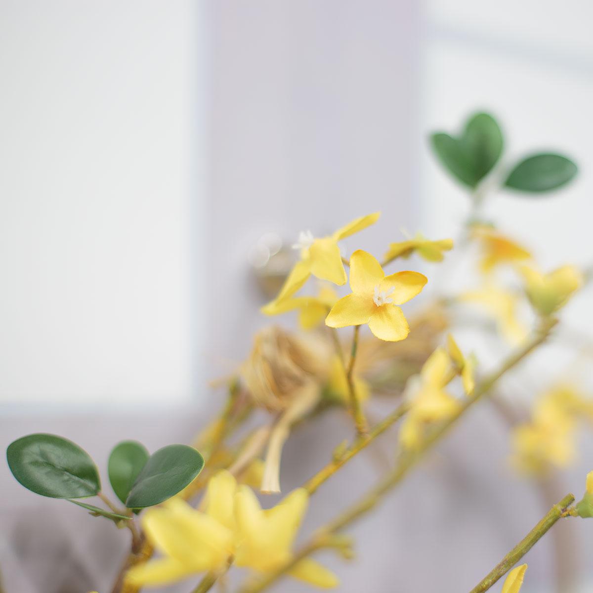 개나리 꽃 디테일 사진2