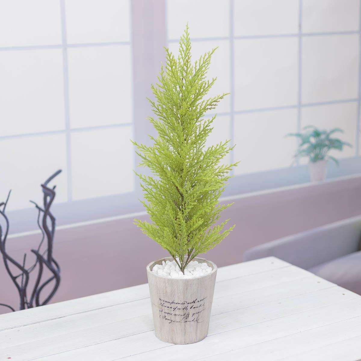 윌마(율마)나무 중 레터링 우든화분 65cm