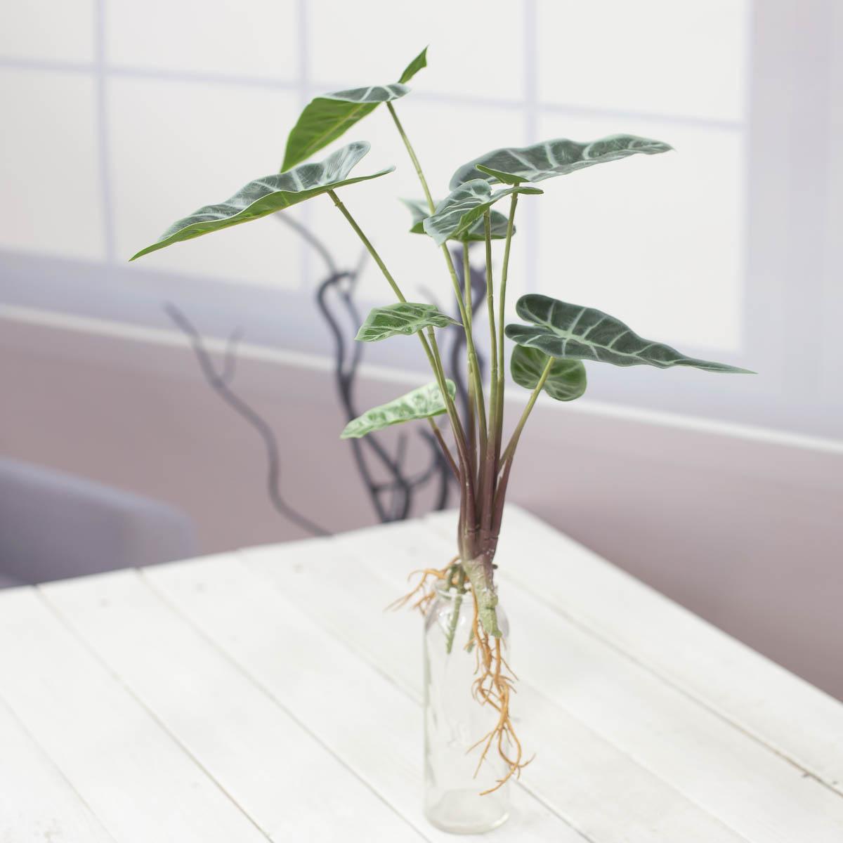 거북 알로카시아 리얼뿌리 부쉬