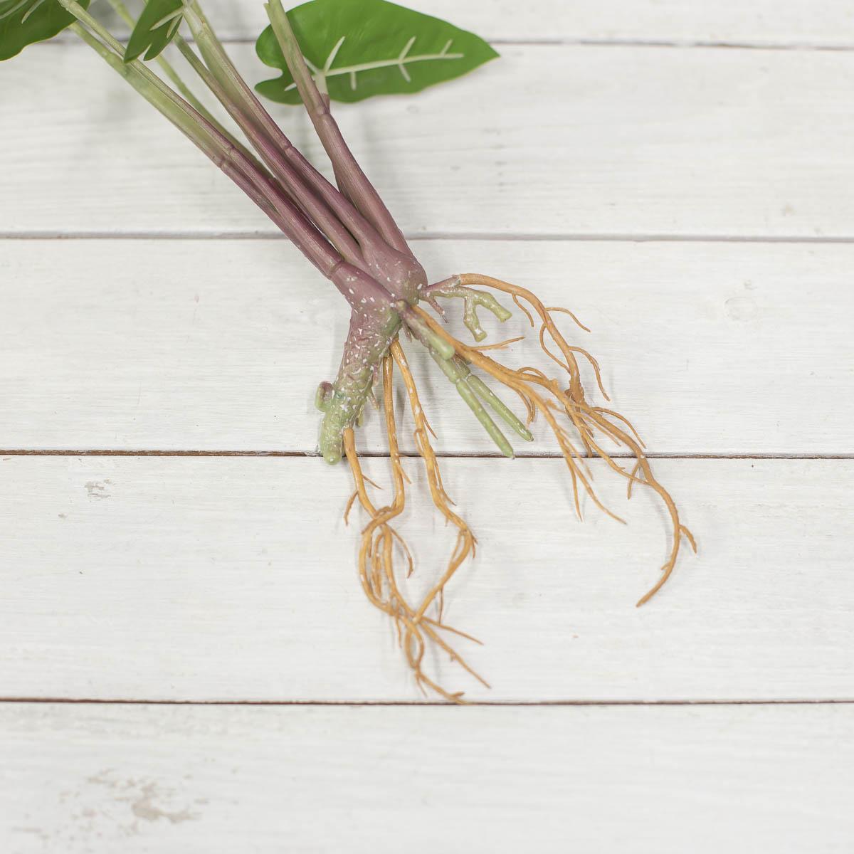 거북 알로카시아 리얼뿌리 부쉬 뿌리부분 디테일