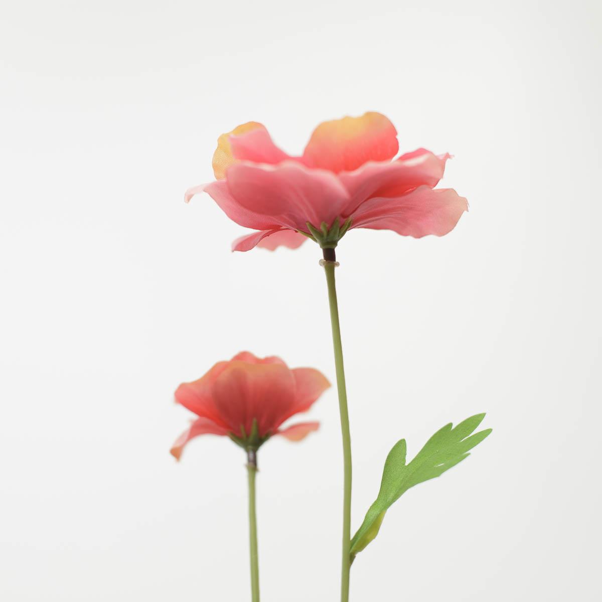 버터플라이 라넌큘러스 꽃 가지 60cm 퓨샤 꽃받침 디테일