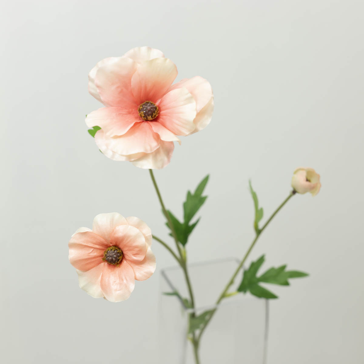 버터플라이 라넌큘러스 꽃 가지 60cm 피치