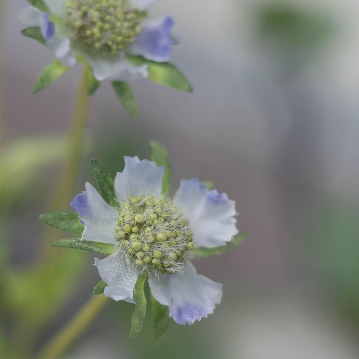 세송이 스카비오사 꽃 가지 62cm Blue(블루)