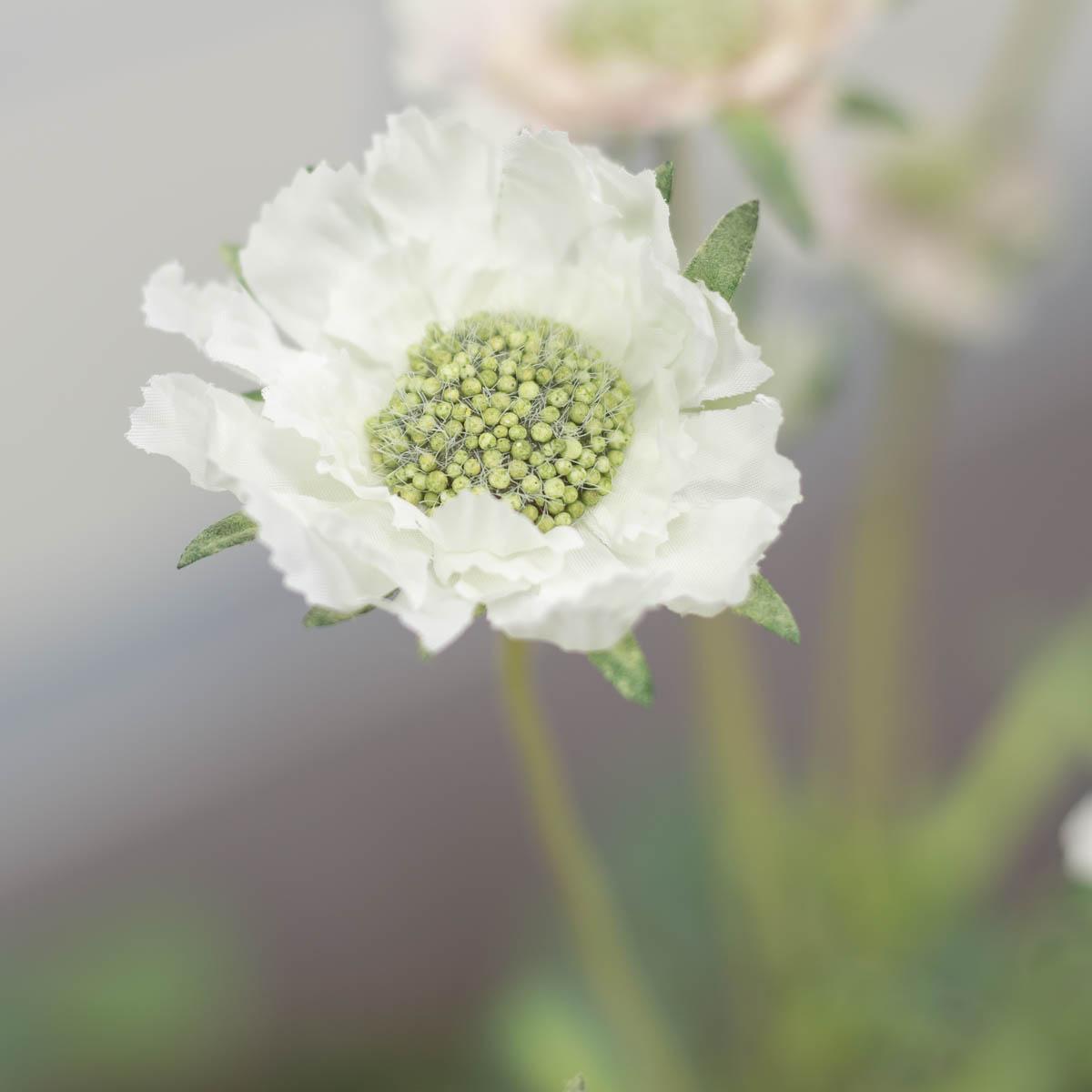 세송이 스카비오사 꽃 가지 62cm Cream(크림)