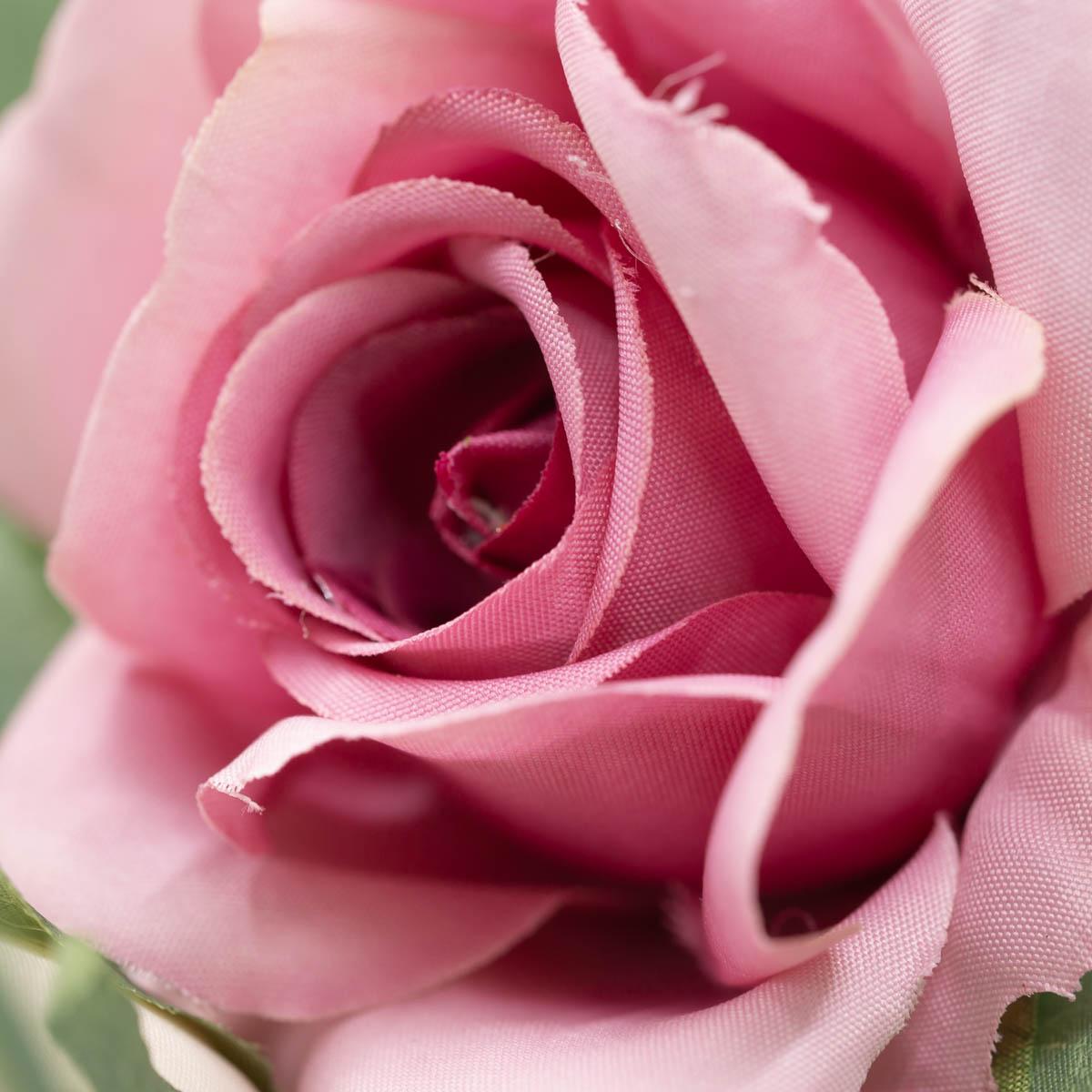 퀸 엘리자베스 장미 꽃 가지 Mauve(모우브)
