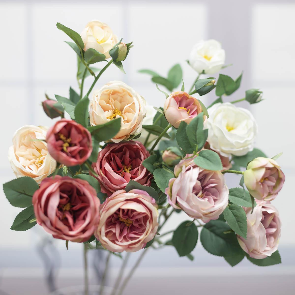오스틴 줄리엣 장미 꽃 가지
