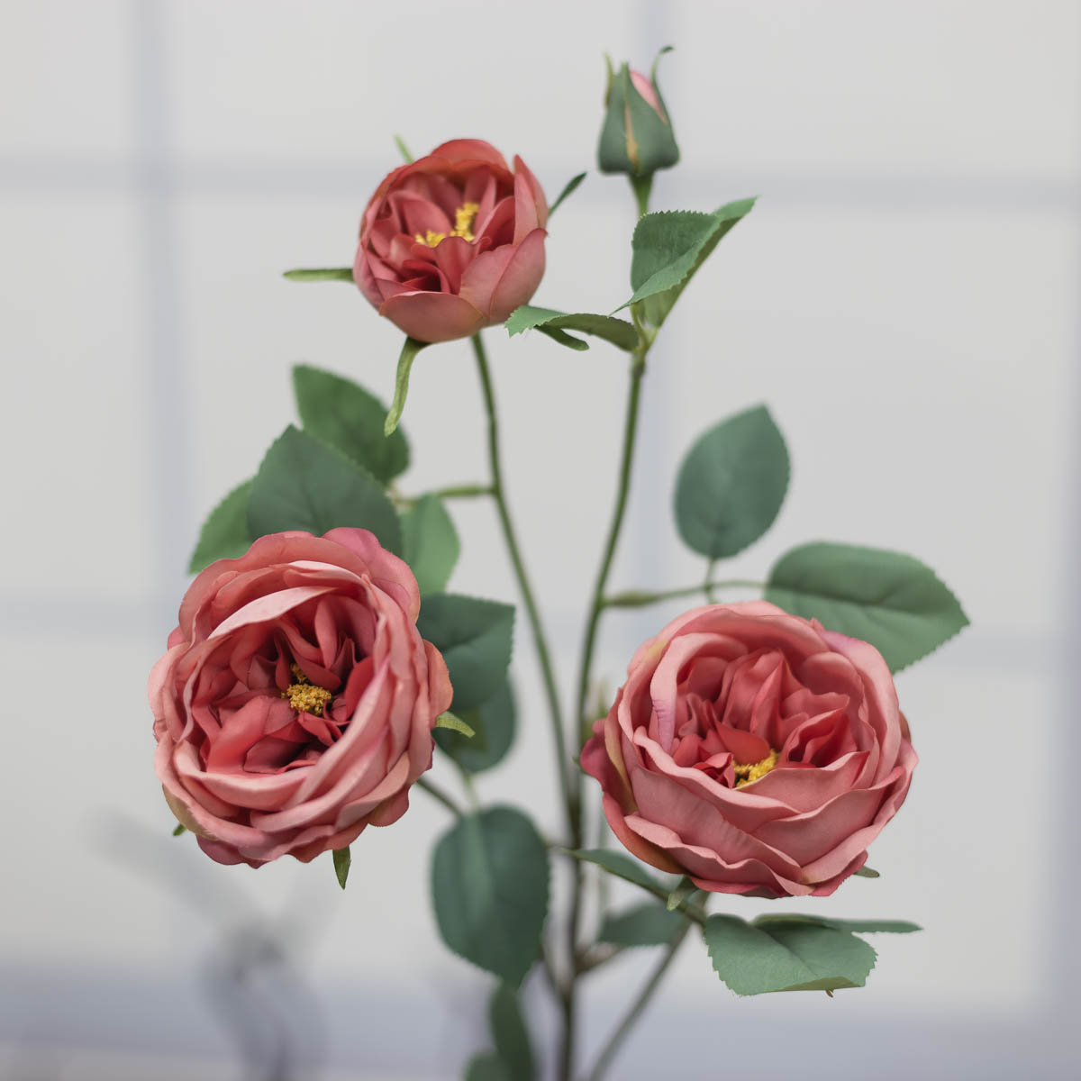 오스틴 줄리엣 장미 꽃 가지 Mauve(모우브)