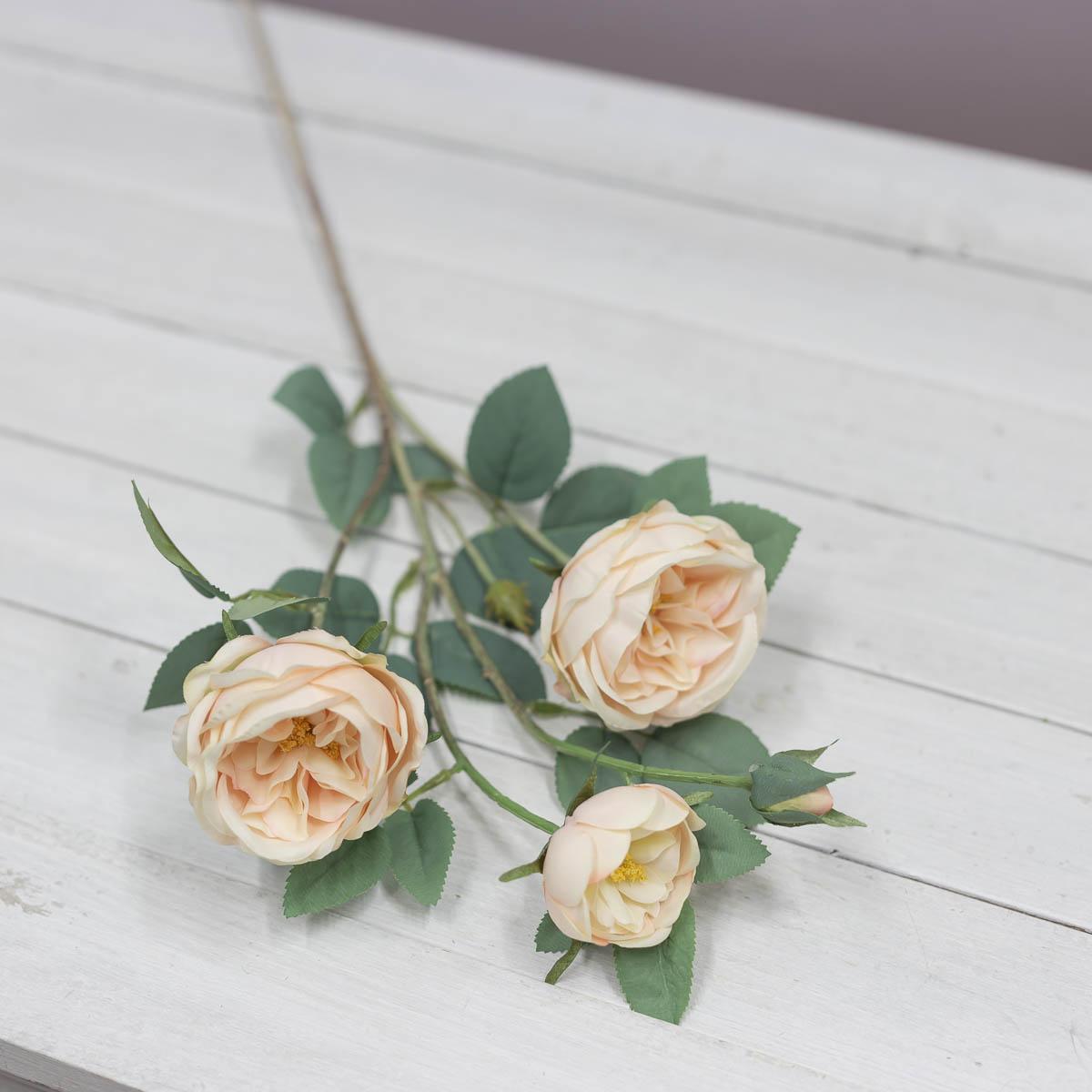오스틴 줄리엣 장미 꽃 가지 Peach(피치)