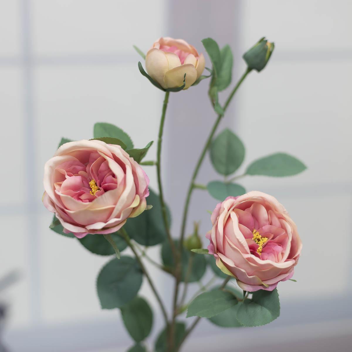 오스틴 줄리엣 장미 꽃 가지 Pink(핑크)