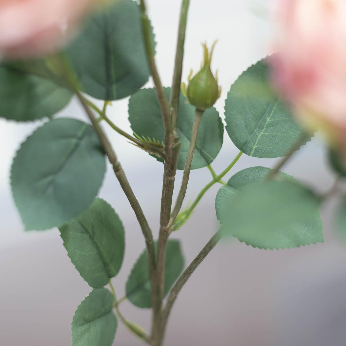 오스틴 줄리엣 장미 꽃 가지 줄기 디테일