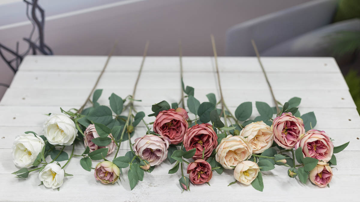 오스틴 줄리엣 장미 꽃 가지 색상비교