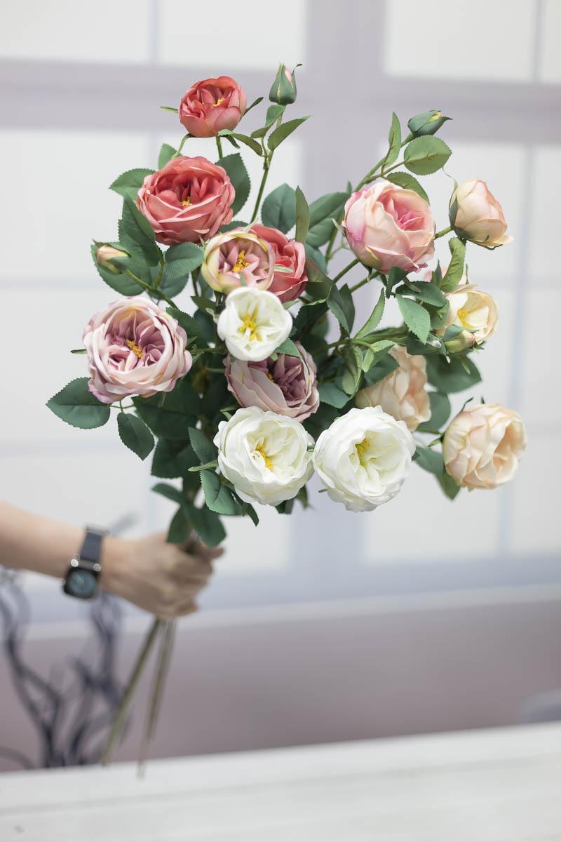 오스틴 줄리엣 장미 꽃 가지 손으로 잡은