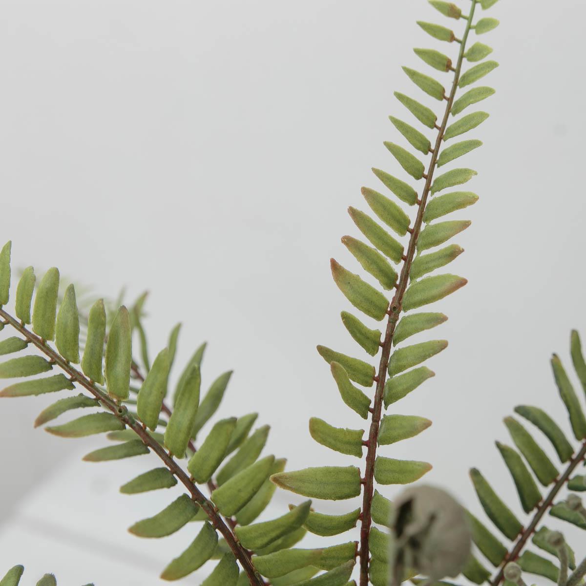 내추럴 보스톤고사리 조화잎 부쉬 조화식물 잎사귀 디테일