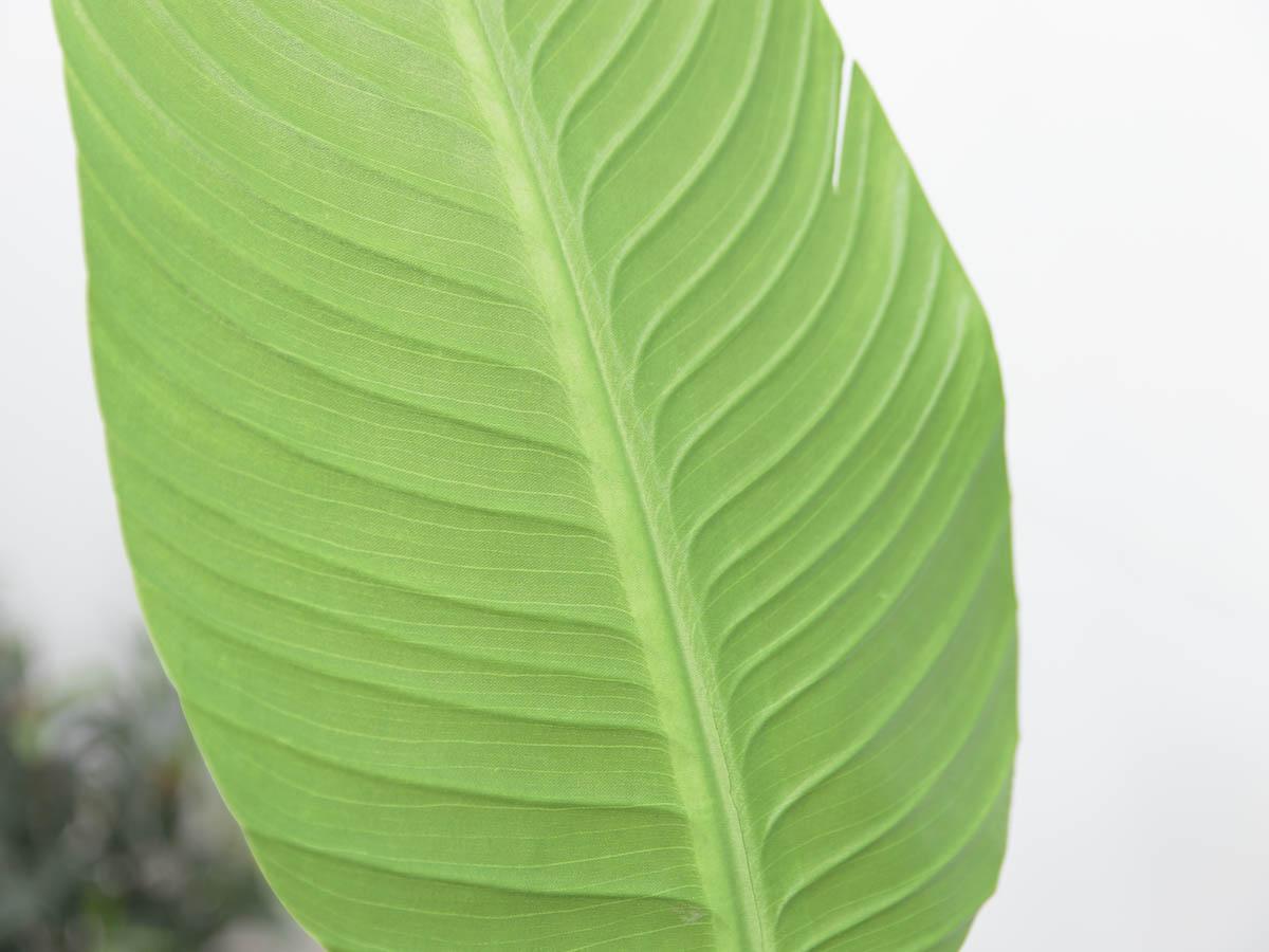 스텔리지아 극락조조화 인조나무 150cm Tuin사각화분 대 세트 잎사귀디테일