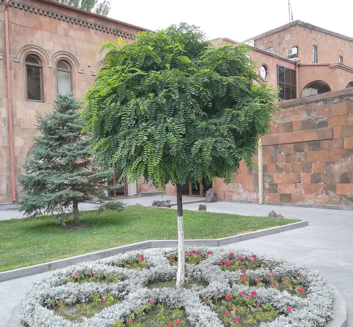 실크플라워 아카시아조화 잎사귀 나무가지 95cm 실제사진비교