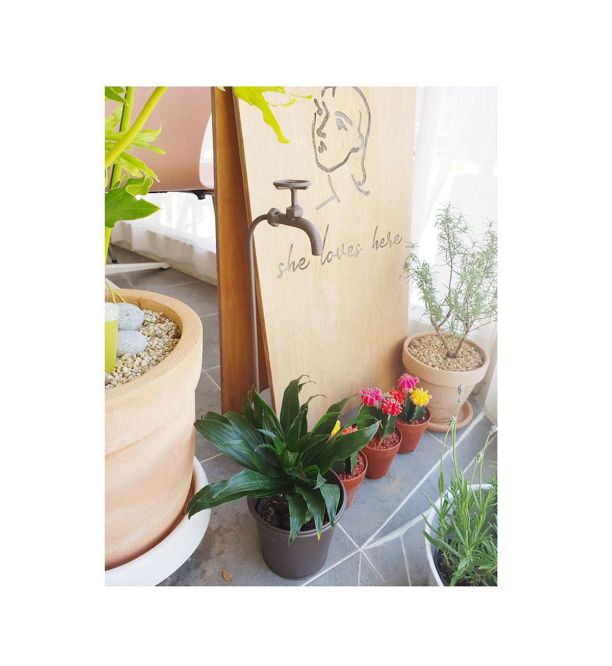 식물 세팅 이미지